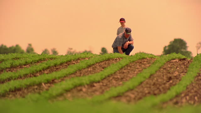 slow motion low angle wide shot male farmer and boy with baseball mitt walking in cultivated field / man kneels / iowa - iowa stock videos & royalty-free footage