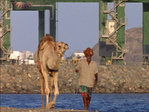 slow motion man leading camel towards camera with industrial area + water in background / Aden, Yemen
