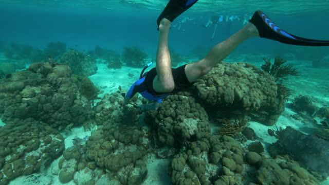 stockvideo's en b-roll-footage met slow motion: man snorkeling over coral reef in ocean - belize city, belize - zwemvlies