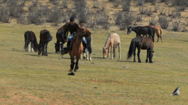 slow motion: man trying to pick cap on field while horseback riding at remote location - ulaanbaatar, mongolia - independent mongolia stock videos & royalty-free footage