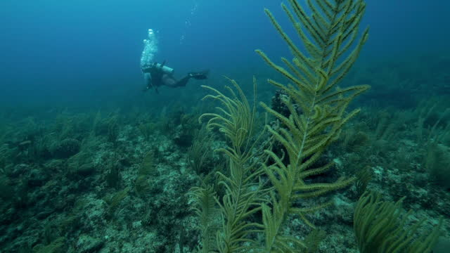 vídeos y material grabado en eventos de stock de slow motion: man with aqualung exploring plants in blue sea - belize city, belize - aqualung diving equipment