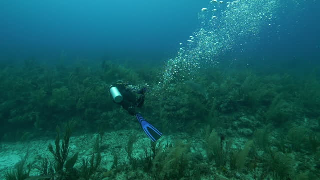 vídeos y material grabado en eventos de stock de slow motion: man with aqualung exploring while swimming undersea - belize city, belize - aqualung diving equipment