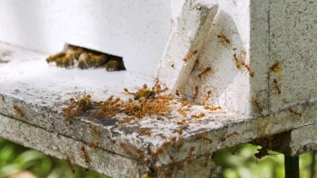 stockvideo's en b-roll-footage met slow motion: veel bijen in de buurt van een ingang naar de korf - honingbij