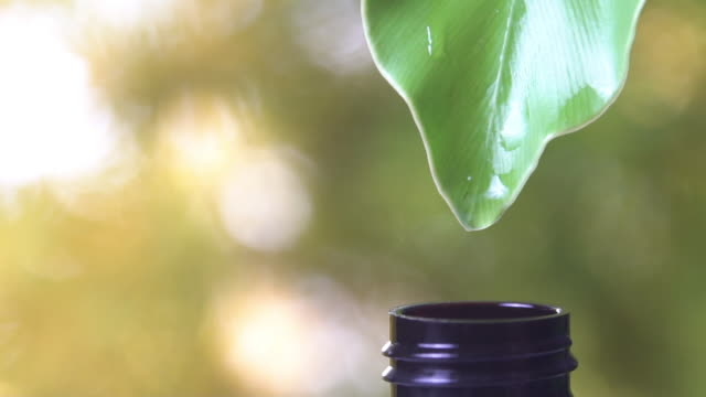 slow motion, many of water drop from green leaf to bottle with copy space nature green background. - organic stock videos & royalty-free footage