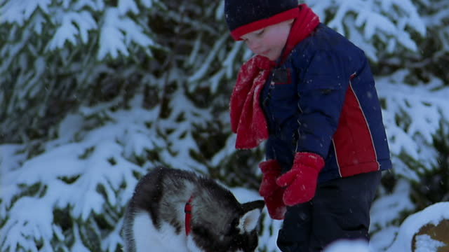 slow motion medium shot boy feeding dog from mitten in snow / pine trees in background - mitten stock videos and b-roll footage