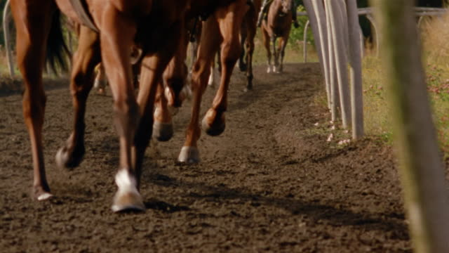 Slow motion medium shot horses' legs as they run on dirt track/ Berkshire, England
