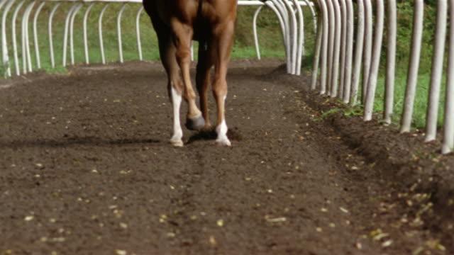 Slow motion medium shot horse's legs as they run on dirt track/ Berkshire, England