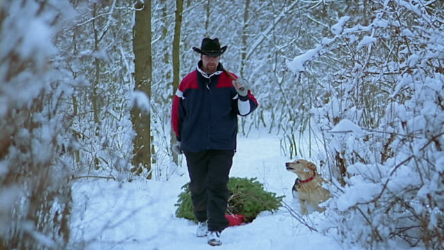 slow motion medium shot man in cowboy hat pulling christmas tree through snow with 2 dogs running around him - cowboy hat stock videos & royalty-free footage
