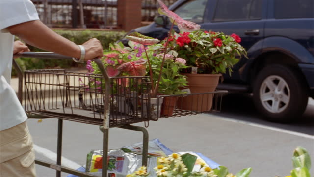 vídeos de stock, filmes e b-roll de slow motion medium shot man pushing cart and woman pulling wagon of plants to car in parking lot of garden center - planta de interior
