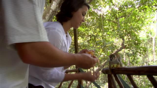vídeos de stock e filmes b-roll de slow motion medium shot pan couple feeding orange to squirrel monkey at ecolodge/ the amazon, brazil - casal de idade mediana