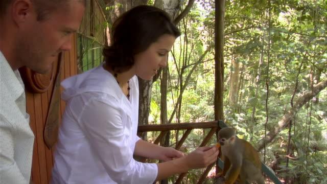 Slow motion medium shot pan couple feeding orange to squirrel monkeys at ecolodge/ The Amazon, Brazil