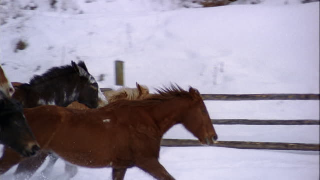 slow motion medium shot tracking shot horses running past cam in snow /  male rancher on horseback / colorado - ranch stock videos & royalty-free footage