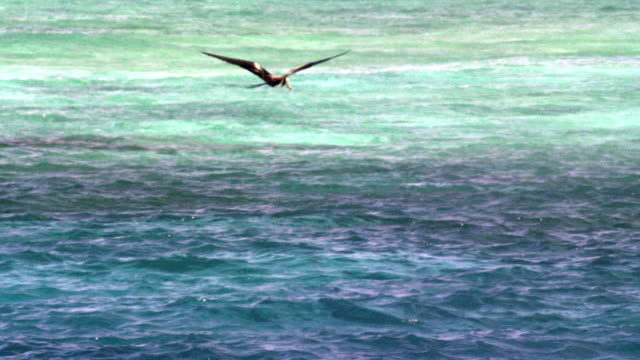 slow motion mid shot of juvenile lesser frigate bird flying over water - water bird stock videos & royalty-free footage