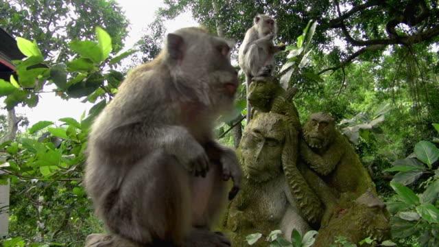 Slow Motion: Monkey Scratching Back