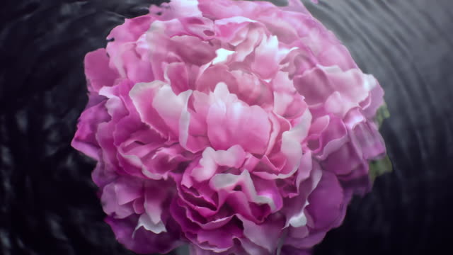slow motion movement of waves and ripples on water surface with a submerged rotating pink peony head on black background - turning stock videos & royalty-free footage