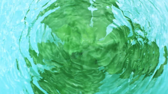vídeos de stock e filmes b-roll de slow motion movement of waves and ripples on water surface with a submerged rotating green succulent plant, on blue background - cor viva