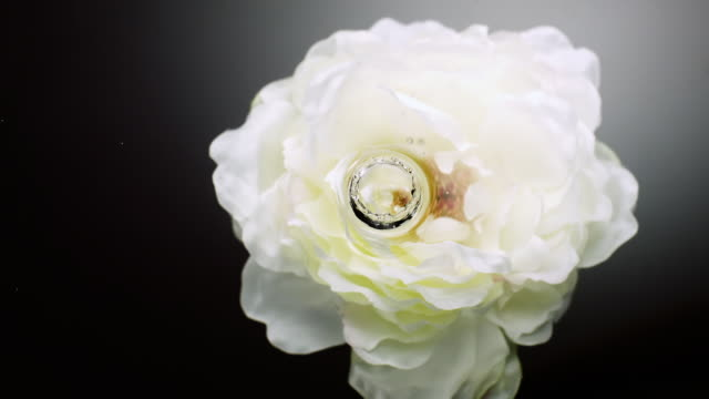 slow motion movement of waves and ripples on water surface with a submerged rotating white peony head on black background - conformity stock videos & royalty-free footage