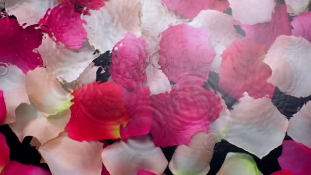 vidéos et rushes de slow motion movement of waves and ripples on water surface with submerged pink rose petals on black background - pétale