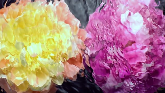 slow motion movement of waves and ripples on water surface with two submerged rotating peony heads on black background - due oggetti video stock e b–roll