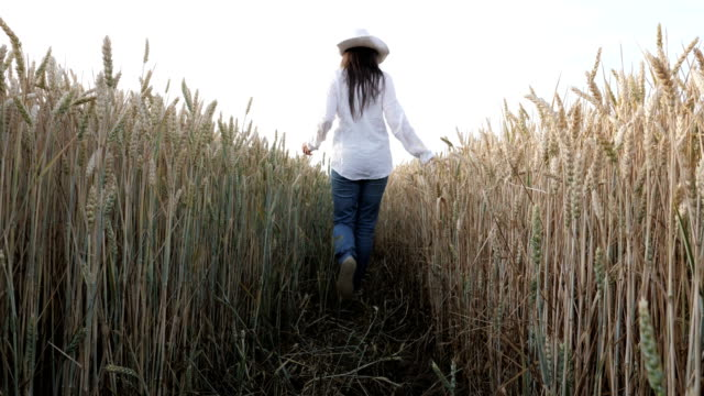 Slow motion of a happy young farmer girl dressed in white shirt and jeans passing among her wheat fields.