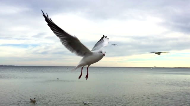 slow motion of a seagull - sea bird stock videos and b-roll footage