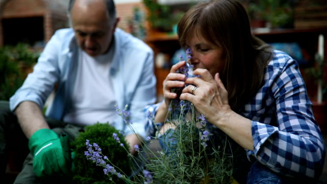 slow motion of a senior woman smelling lavender - pot plant stock videos and b-roll footage