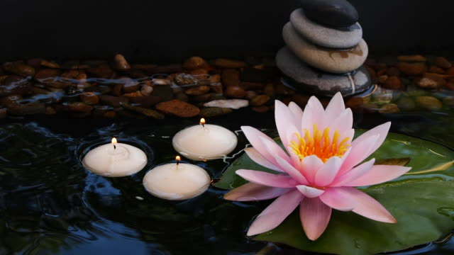 slow motion of balance pebble stones, small candles and pink lotus water lily flower - lily stock videos & royalty-free footage