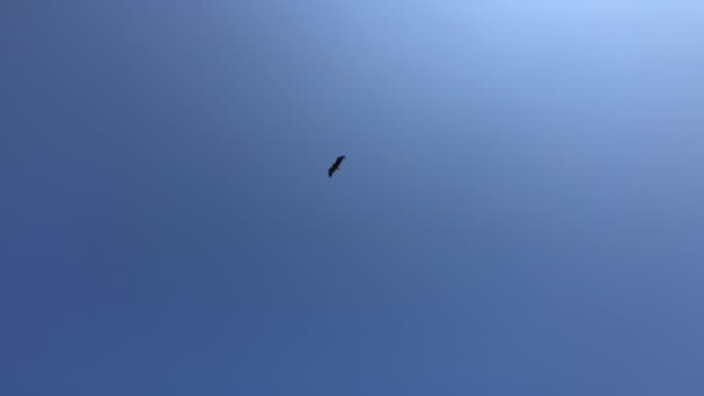 vídeos y material grabado en eventos de stock de slow motion of bald eagle flying in the sky in alaska - volar