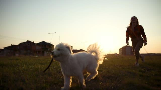 Langsame Bewegung der schönen jungen Frau und ihres Hundes mit Stock im Mund, der bei Sonnenuntergang auf einer Wiese läuft