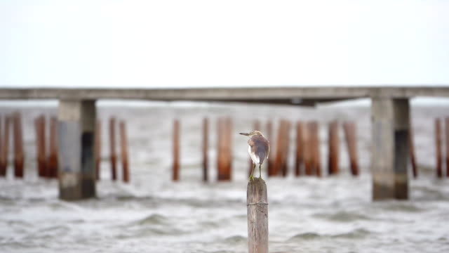 Slow motion of Bird on the bamboo in the sea