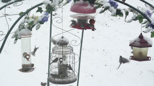 Slow motion of birds eating in Winter
