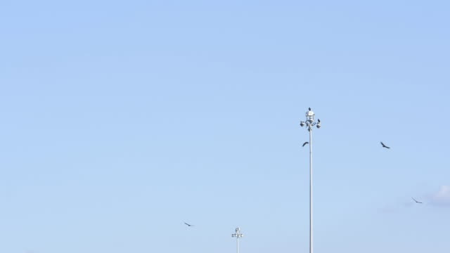 Slow motion of birds flying around a highway street lamp