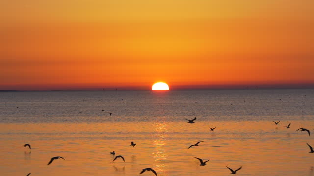 slow motion of birds flying at sunset in the beach area - pursuit concept stock videos & royalty-free footage