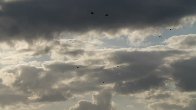 vídeos de stock, filmes e b-roll de slow motion of birds flying with storm clouds background at sunset - overcast