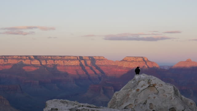 slow motion of birds vulture at sunset in grand canyon national park - vulture stock videos & royalty-free footage