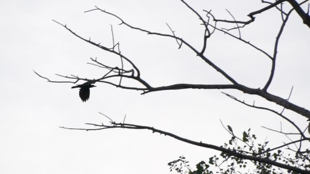 slow motion of black crow bird flying - crow stock videos & royalty-free footage