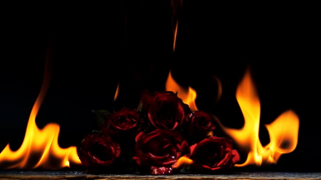 slow motion of burning red rose on black background - burning stock videos & royalty-free footage