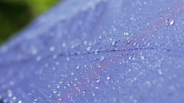 slow motion of close-up of rain falling on umbrella - covering stock videos & royalty-free footage