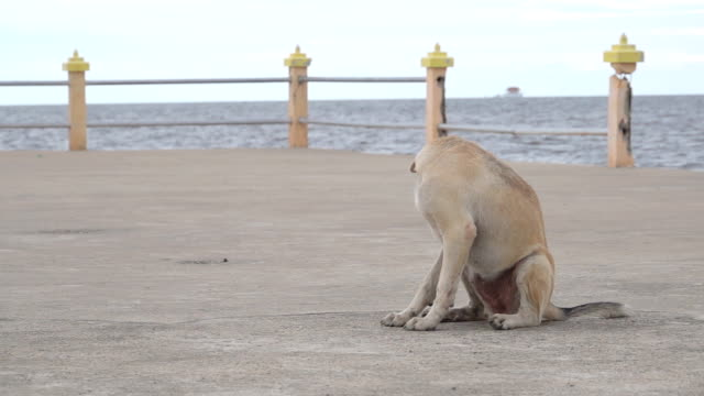 slow motion of dog on the street - parte del corpo animale video stock e b–roll