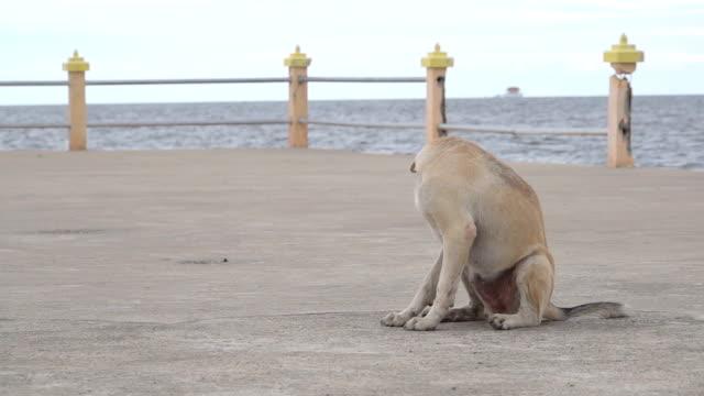 slow-motion der hund auf der straße - tierische nase stock-videos und b-roll-filmmaterial