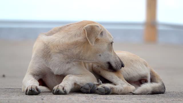 vídeos y material grabado en eventos de stock de lenta de perro durmiendo - boca de animal