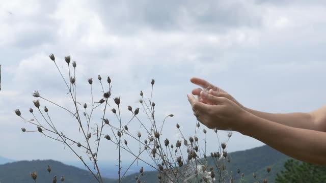 slow motion of dried flower blown away by wind - morbidezza video stock e b–roll