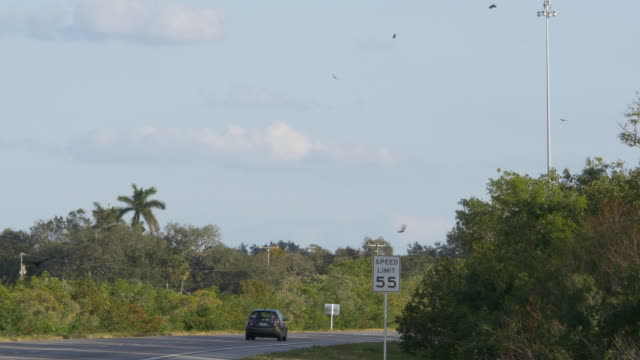 Slow motion of eagle birds flying over traffic in Florida