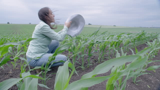 slow motion of farmer woman examining young corn plants in the middle of a cultivated field. walking and checking out the plants, using digital tablet. agricultural occupation. - agricultural occupation stock videos & royalty-free footage