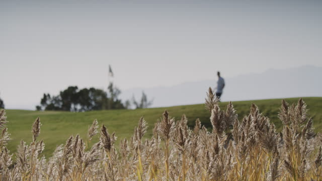 vidéos et rushes de slow motion of golfer walking behind tall grass blowing in wind / cedar hills, utah, united states - golfeur