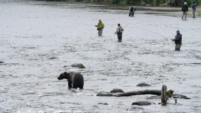 slow motion of group off fishermen fishing while bear hunting in the foreground in alaska - mammal stock videos & royalty-free footage