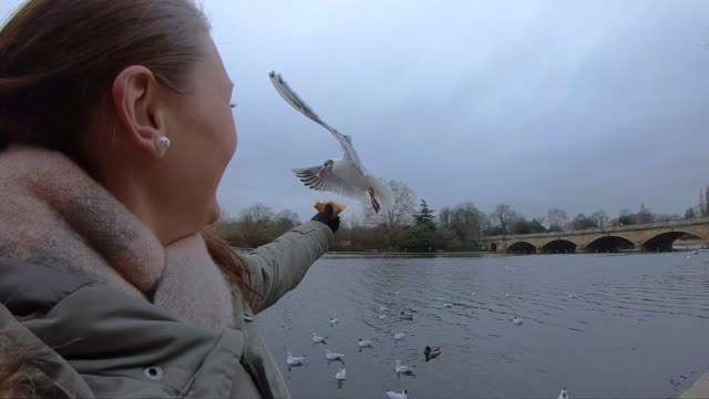 slow motion of happy woman feeding birds in the hyde park during travel vacations in london. - 東ヨーロッパ民族点の映像素材/bロール