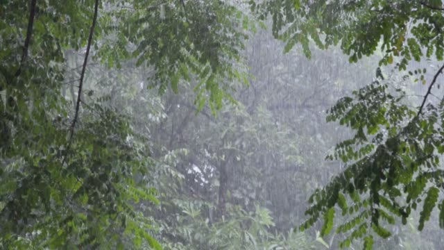 Slow motion of heavy rain with lush foliage background.