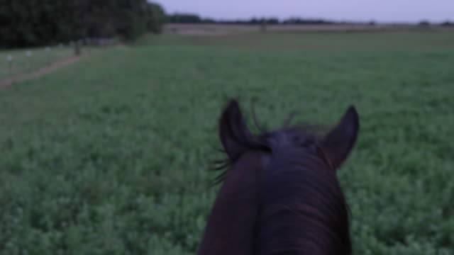 Slow motion of horse running on field