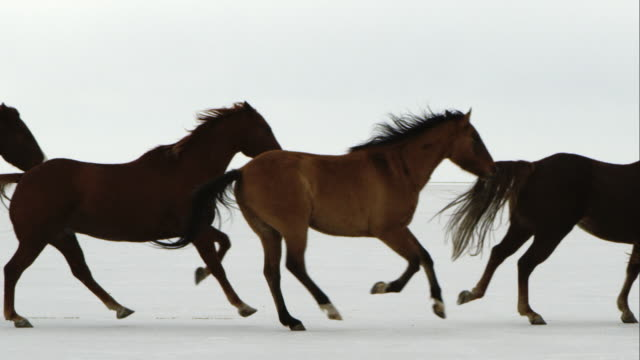 slow motion of horses running. - cowboy stock videos & royalty-free footage